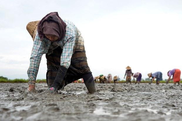 ဒလမြို့နယ်မှာ စပါးစိုက်ပျိုးဖို့ ပျိုးကြဲနေကြသော လယ်စိုက်တောင်သူတချို့ကို ၂ဝ၁၈ ခုနှစ်က တွေ့ရစဉ်။